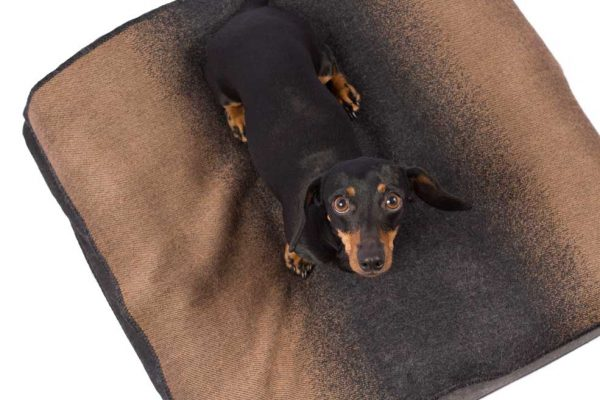 """Excellent and utmost style. Enjoy the heavenly softness, non-allergic and warm comfort of our wonderful Alpaca throw made in Peru. Pamper your dog with the added warmth of this luxurious knit. <ul> <li aria-level=""""1"""">Handcrafted from alpaca fiber blends</li> <li aria-level=""""1"""">Softand warm to the touch</li> <li aria-level=""""1"""">Not itchy & hypoallergenic</li> </ul> This garment has been designed thinking on the well being of your pet."""