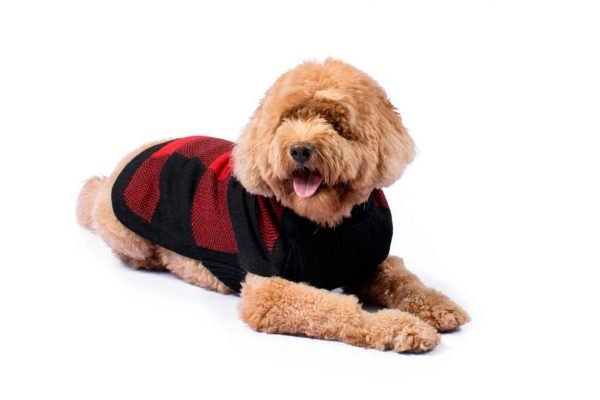 """<em><strong>We combine textile heritage and global trends with alpaca—a raw, sustainable, and luxurious fiber—to make our designs unique.</strong></em> Our dog will look natty sporting this ever-popular plaid intarsia knitwear. Our alpaca blend buffalo plaid sweater refuses to go out of style and offers the ultimate in comfort and warmth. Features ribbed turtleneck, leash opening - Model Yuraq is a Frenchie size M - Model Mika is a Goldendoodle size XL - Model Gloria is a Mini Dachshund size XS This garment has been designed thinking on the well being of your pet. [fusion_button link=""""https://alqowasi.com/wp-content/uploads/2021/03/Sizing-guide-sweater-dresses.png"""" text_transform=""""none"""" title="""""""" target=""""lightbox"""" link_attributes="""""""" alignment_medium="""""""" alignment_small="""""""" alignment="""""""" modal="""""""" hide_on_mobile=""""small-visibility,medium-visibility,large-visibility"""" sticky_display=""""normal,sticky"""" class=""""button-chart"""" id="""""""" color=""""default"""" button_gradient_top_color="""""""" button_gradient_bottom_color="""""""" button_gradient_top_color_hover="""""""" button_gradient_bottom_color_hover="""""""" accent_color="""""""" accent_hover_color="""""""" type="""""""" bevel_color="""""""" border_width="""""""" border_radius="""""""" border_color="""""""" border_hover_color="""""""" size=""""small"""" stretch=""""default"""" margin_top="""""""" margin_right="""""""" margin_bottom="""""""" margin_left="""""""" icon=""""fa-ruler fas"""" icon_position=""""left"""" icon_divider=""""no"""" animation_type="""""""" animation_direction=""""left"""" animation_speed=""""0.3"""" animation_offset=""""""""]Sizing Chart[/fusion_button]"""