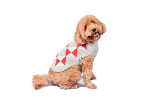 """<em><strong>We combine textile heritage and global trends with alpaca—a raw, sustainable, and luxurious fiber—to make our designs unique.</strong></em> This alpaca blend sweater has a classy and modern look to it. Your dog will look like quite proper in this Alqo Wasi classic. Intarsia knit. Features ribbed turtleneck, leash opening - Model Mica is a Goldendoodle size XL - Model Eva is a Frenchie size XS This garment has been designed thinking on the well being of your pet. <strong>Limited Stock!</strong> [fusion_button link=""""https://alqowasi.com/wp-content/uploads/2021/03/Sizing-guide-sweater-dresses.png"""" text_transform=""""none"""" title="""""""" target=""""lightbox"""" link_attributes="""""""" alignment_medium="""""""" alignment_small="""""""" alignment="""""""" modal="""""""" hide_on_mobile=""""small-visibility,medium-visibility,large-visibility"""" sticky_display=""""normal,sticky"""" class=""""button-chart"""" id="""""""" color=""""default"""" button_gradient_top_color="""""""" button_gradient_bottom_color="""""""" button_gradient_top_color_hover="""""""" button_gradient_bottom_color_hover="""""""" accent_color="""""""" accent_hover_color="""""""" type="""""""" bevel_color="""""""" border_width="""""""" border_radius="""""""" border_color="""""""" border_hover_color="""""""" size=""""small"""" stretch=""""default"""" margin_top="""""""" margin_right="""""""" margin_bottom="""""""" margin_left="""""""" icon=""""fa-ruler fas"""" icon_position=""""left"""" icon_divider=""""no"""" animation_type="""""""" animation_direction=""""left"""" animation_speed=""""0.3"""" animation_offset=""""""""]Sizing Chart[/fusion_button]"""