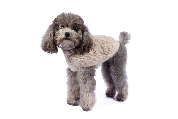 "<em><strong>We combine textile heritage and global trends with alpaca—a raw, sustainable, and luxurious fiber—to make our designs unique.</strong></em> Soft as a cloud in fluffy alpaca. This luxurious cable knit is the ultimate timeless staple for any dog's wardrobe. Features ribbed turtleneck, leash opening - Model Dolores is a Miniature Poodle size XS This garment has been designed thinking on the well being of your pet. [fusion_button link=""https://alqowasi.com/wp-content/uploads/2021/03/Sizing-guide-sweater-dresses.png"" text_transform=""none"" title="""" target=""lightbox"" link_attributes="""" alignment_medium="""" alignment_small="""" alignment="""" modal="""" hide_on_mobile=""small-visibility,medium-visibility,large-visibility"" sticky_display=""normal,sticky"" class=""button-chart"" id="""" color=""default"" button_gradient_top_color="""" button_gradient_bottom_color="""" button_gradient_top_color_hover="""" button_gradient_bottom_color_hover="""" accent_color="""" accent_hover_color="""" type="""" bevel_color="""" border_width="""" border_radius="""" border_color="""" border_hover_color="""" size=""small"" stretch=""default"" margin_top="""" margin_right="""" margin_bottom="""" margin_left="""" icon=""fa-ruler fas"" icon_position=""left"" icon_divider=""no"" animation_type="""" animation_direction=""left"" animation_speed=""0.3"" animation_offset=""""]Sizing Chart[/fusion_button]"