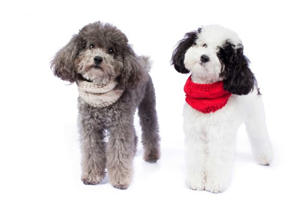 <em><strong>We combine textile heritage and global trends with alpaca—a raw, sustainable, and luxurious fibre—to make our designs unique.</strong></em> The PAW-fect statement for us Top fash-hounds this fall season! Soft and snuggle, our Alpaca blend chunky scarf is a great addition for your best pal closet. Simply slip over your dog´s neck and you are ready to go. It's made with super soft Alpaca fiber for maximum comfort anywhere your fashionable adventures take you. Beautifully made with great attention to detail. This garment has been designed thinking on the well being of your pet.