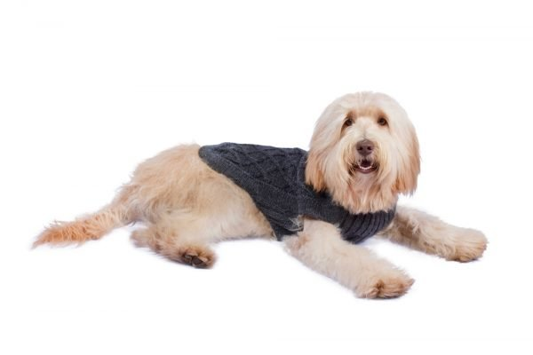 """<em><strong>We combine textile heritage and global trends with alpaca—a raw, sustainable, and luxurious fiber—to make our designs unique.</strong></em> Comfy but no less stylish, this alpaca knit pullover features intricate flower pattern. Itwill take your dog through winter and will turn the sidewalk into a runway! Features ribbed turtleneck, leash opening - Model Paco is a Westie size M - Model Luna is a Labradoodle size L This garment has been designed thinking on the well being of your pet. [fusion_button link=""""https://alqowasi.com/wp-content/uploads/2021/03/Sizing-guide-sweater-dresses.png"""" text_transform=""""none"""" title="""""""" target=""""lightbox"""" link_attributes="""""""" alignment_medium="""""""" alignment_small="""""""" alignment="""""""" modal="""""""" hide_on_mobile=""""small-visibility,medium-visibility,large-visibility"""" sticky_display=""""normal,sticky"""" class=""""button-chart"""" id="""""""" color=""""default"""" button_gradient_top_color="""""""" button_gradient_bottom_color="""""""" button_gradient_top_color_hover="""""""" button_gradient_bottom_color_hover="""""""" accent_color="""""""" accent_hover_color="""""""" type="""""""" bevel_color="""""""" border_width="""""""" border_radius="""""""" border_color="""""""" border_hover_color="""""""" size=""""small"""" stretch=""""default"""" margin_top="""""""" margin_right="""""""" margin_bottom="""""""" margin_left="""""""" icon=""""fa-ruler fas"""" icon_position=""""left"""" icon_divider=""""no"""" animation_type="""""""" animation_direction=""""left"""" animation_speed=""""0.3"""" animation_offset=""""""""]Sizing Chart[/fusion_button]"""