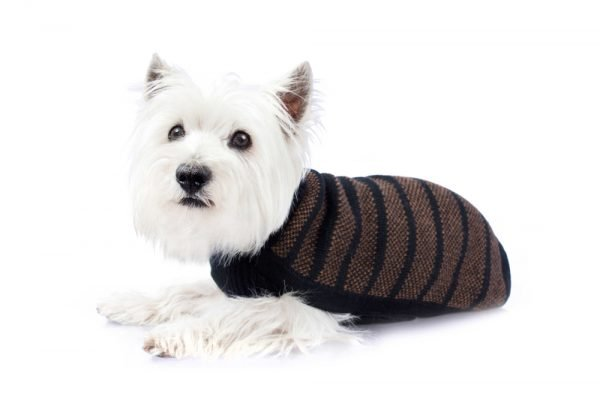 """<em><strong>We combine textile heritage and global trends with alpaca—a raw, sustainable, and luxurious fiber—to make our designs unique.</strong></em> An upscale feel and distinguished design sets this sweater apart from the rest! Feel spoiled in black and tan Alpaca knit. No sleeves for cozy and comfy fit. Features ribbed turtleneck, leash opening - Model Charle is a Corgi size XL - Model Luna is a Labradoodle size L This garment has been designed thinking on the well being of your pet. <strong>Limited stock!</strong> [fusion_button link=""""https://alqowasi.com/wp-content/uploads/2021/03/Sizing-guide-sweater-dresses.png"""" text_transform=""""none"""" title="""""""" target=""""lightbox"""" link_attributes="""""""" alignment_medium="""""""" alignment_small="""""""" alignment="""""""" modal="""""""" hide_on_mobile=""""small-visibility,medium-visibility,large-visibility"""" sticky_display=""""normal,sticky"""" class=""""button-chart"""" id="""""""" color=""""default"""" button_gradient_top_color="""""""" button_gradient_bottom_color="""""""" button_gradient_top_color_hover="""""""" button_gradient_bottom_color_hover="""""""" accent_color="""""""" accent_hover_color="""""""" type="""""""" bevel_color="""""""" border_width="""""""" border_radius="""""""" border_color="""""""" border_hover_color="""""""" size=""""small"""" stretch=""""default"""" margin_top="""""""" margin_right="""""""" margin_bottom="""""""" margin_left="""""""" icon=""""fa-ruler fas"""" icon_position=""""left"""" icon_divider=""""no"""" animation_type="""""""" animation_direction=""""left"""" animation_speed=""""0.3"""" animation_offset=""""""""]Sizing Chart[/fusion_button]"""
