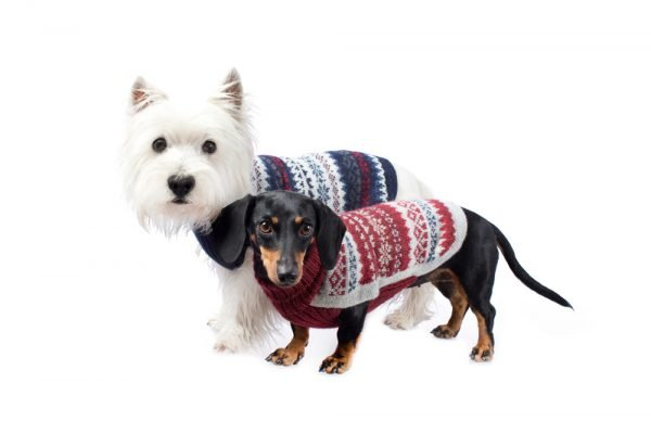 <em><strong>We combine textile heritage and global trends with alpaca—a raw, sustainable, and luxurious fiber—to make our designs unique.</strong></em>  Lightweight and superbly soft, this dashing knit sweater is handloomed in alpaca blend yarns. You'll love walking through the park with your dapper dog.  Features ribbed turtleneck, leash opening  - Model Cala is a small female Boston terrier size XS  - Model Gloria is a Mini Dachshund size XS  - Model Paco is a Westie size M  This garment has been designed thinking on the well being of your pet.