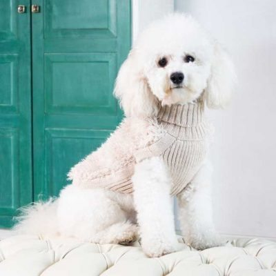 """<span style=""""font-weight: 400;"""">In a pet world full of trends, be a classic.</span> <ul> <li aria-level=""""1"""">Handcrafted from alpaca fiber blends</li> <li aria-level=""""1"""">Hand-crochet detail</li> <li style=""""font-weight: 400;"""" aria-level=""""1""""><span style=""""font-weight: 400;"""">Soft</span><span style=""""font-weight: 400;""""> and warm to the touch</span></li> <li style=""""font-weight: 400;"""" aria-level=""""1""""><span style=""""font-weight: 400;"""">Not itchy & hypoallergenic</span></li> <li><span style=""""font-weight: 400;"""">Leash opening</span></li> <li>Crocheted detail</li> </ul> – Churro is a Poodle size Small This garment has been designed thinking on the well-being of your pet. [fusion_button link=""""https://alqowasi.com/wp-content/uploads/2021/03/Sizing-guide-sweater-dresses.png"""" text_transform=""""none"""" title="""""""" target=""""lightbox"""" link_attributes="""""""" alignment_medium="""""""" alignment_small="""""""" alignment="""""""" modal="""""""" hide_on_mobile=""""small-visibility,medium-visibility,large-visibility"""" sticky_display=""""normal,sticky"""" class=""""button-chart"""" id="""""""" color=""""default"""" button_gradient_top_color="""""""" button_gradient_bottom_color="""""""" button_gradient_top_color_hover="""""""" button_gradient_bottom_color_hover="""""""" accent_color="""""""" accent_hover_color="""""""" type="""""""" bevel_color="""""""" border_width="""""""" border_radius="""""""" border_color="""""""" border_hover_color="""""""" size=""""small"""" stretch=""""default"""" margin_top="""""""" margin_right="""""""" margin_bottom="""""""" margin_left="""""""" icon=""""fa-ruler fas"""" icon_position=""""left"""" icon_divider=""""no"""" animation_type="""""""" animation_direction=""""left"""" animation_speed=""""0.3"""" animation_offset=""""""""]Sizing Chart[/fusion_button]  <strong>Please note that orders that placed during this week including PRE-ORDERED garments will be shipped from October 27th to November 4th, 2021. As always, we can assure you that our unique collection is worth the wait. Once your order is ready to ship, delivery time ranges from 3-5 business days worldwide with DHL.</strong>"""