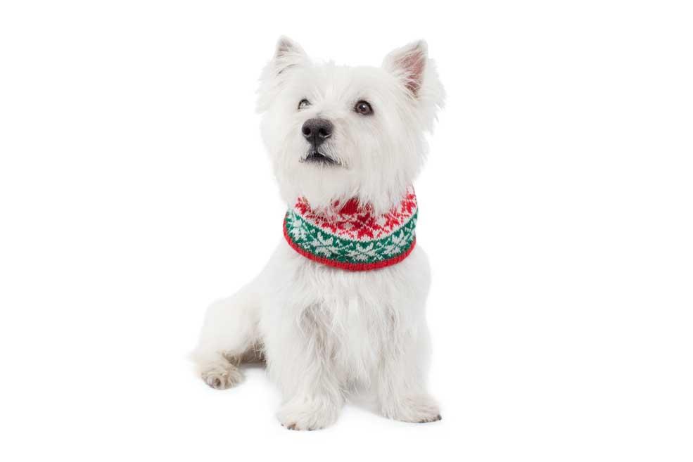 Christmas Snowflakes Red & Green Alpaca Dog Scarf