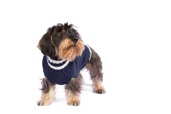 """<span style=""""font-weight: 400;"""">Chunky, natural, handmade cable pullovers are the real treat for your dog! Forever warm in alpaca wool. Find it in three available colors – red, silver grey, navy blue.</span> <ul> <li aria-level=""""1"""">Handcrafted from alpaca fiber blends</li> <li style=""""font-weight: 400;"""" aria-level=""""1""""><span style=""""font-weight: 400;"""">Soft</span><span style=""""font-weight: 400;""""> and warm to the touch</span></li> <li style=""""font-weight: 400;"""" aria-level=""""1""""><span style=""""font-weight: 400;"""">Not itchy & hypoallergenic</span></li> <li><span style=""""font-weight: 400;"""">Leash opening</span></li> </ul> - Model Sam is a Wirehaired Dachshund size S This garment has been designed thinking on the well being of your pet. [fusion_button link=""""https://alqowasi.com/wp-content/uploads/2021/03/Sizing-guide-sweater-dresses.png"""" text_transform=""""none"""" title="""""""" target=""""lightbox"""" link_attributes="""""""" alignment_medium="""""""" alignment_small="""""""" alignment="""""""" modal="""""""" hide_on_mobile=""""small-visibility,medium-visibility,large-visibility"""" sticky_display=""""normal,sticky"""" class=""""button-chart"""" id="""""""" color=""""default"""" button_gradient_top_color="""""""" button_gradient_bottom_color="""""""" button_gradient_top_color_hover="""""""" button_gradient_bottom_color_hover="""""""" accent_color="""""""" accent_hover_color="""""""" type="""""""" bevel_color="""""""" border_width="""""""" border_radius="""""""" border_color="""""""" border_hover_color="""""""" size=""""small"""" stretch=""""default"""" margin_top="""""""" margin_right="""""""" margin_bottom="""""""" margin_left="""""""" icon=""""fa-ruler fas"""" icon_position=""""left"""" icon_divider=""""no"""" animation_type="""""""" animation_direction=""""left"""" animation_speed=""""0.3"""" animation_offset=""""""""]Sizing Chart[/fusion_button]"""