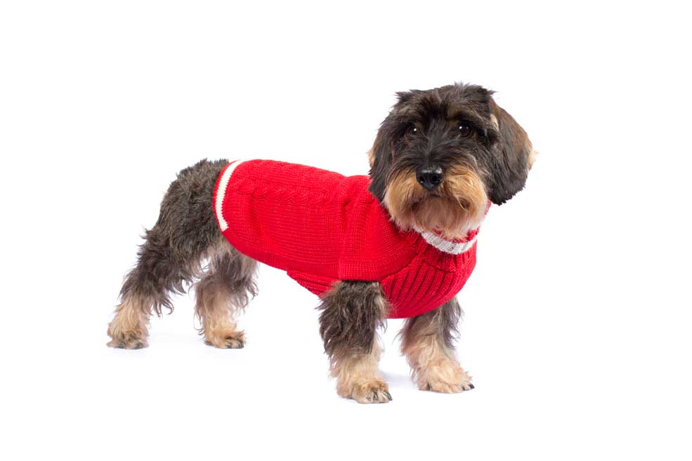 Varsity Cable Red alpaca dog sweater