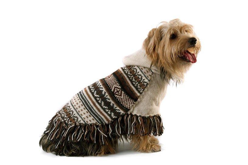 Feather Bliss Alpaca Dog Poncho