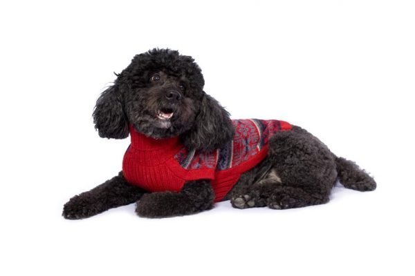 """<em><strong>We combine textile heritage and global trends with alpaca—a raw, sustainable, and luxurious fiber—to make our designs unique.</strong></em> Comfy but no less stylish, this alpaca knit pullover features intricate flower pattern. It will take your dog through winter and will turn the sidewalk into a runway! Features ribbed turtleneck, leash opening - Model Eva is a Frenchie size S - Model Benny is a Medium Poodle size L - Model Gloria is a Mini Dachshund size XS This garment has been designed thinking on the well being of your pet. <strong>Limited Stock!</strong> [fusion_button link=""""https://alqowasi.com/wp-content/uploads/2021/03/Sizing-guide-sweater-dresses.png"""" text_transform=""""none"""" title="""""""" target=""""lightbox"""" link_attributes="""""""" alignment_medium="""""""" alignment_small="""""""" alignment="""""""" modal="""""""" hide_on_mobile=""""small-visibility,medium-visibility,large-visibility"""" sticky_display=""""normal,sticky"""" class=""""button-chart"""" id="""""""" color=""""default"""" button_gradient_top_color="""""""" button_gradient_bottom_color="""""""" button_gradient_top_color_hover="""""""" button_gradient_bottom_color_hover="""""""" accent_color="""""""" accent_hover_color="""""""" type="""""""" bevel_color="""""""" border_width="""""""" border_radius="""""""" border_color="""""""" border_hover_color="""""""" size=""""small"""" stretch=""""default"""" margin_top="""""""" margin_right="""""""" margin_bottom="""""""" margin_left="""""""" icon=""""fa-ruler fas"""" icon_position=""""left"""" icon_divider=""""no"""" animation_type="""""""" animation_direction=""""left"""" animation_speed=""""0.3"""" animation_offset=""""""""]Sizing Chart[/fusion_button]"""