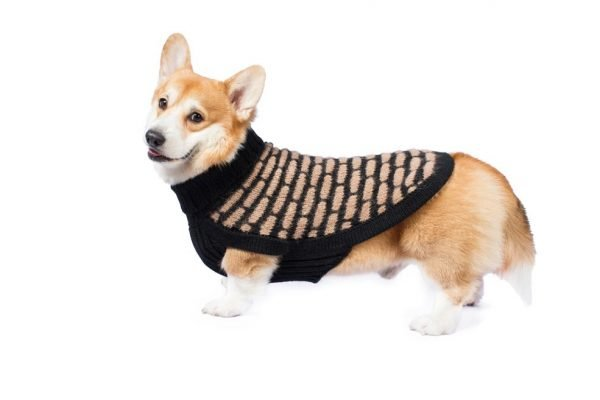 "<strong><em>We combine textile heritage and global trends with Alpaca-a raw, sustainable, and luxurious fiber-to make our designs unique.</em></strong> This extraordinary design is a modern classic. Lightweight and super warm, this Alpaca sweater in neutral colors enhances your dog's natural beauty. Perfect for the fall-winter season. Features ribbed turtleneck, leash opening - Model Charle is a Corgi size XL This garment has been designed thinking on the well being of your pet. [fusion_button link=""https://alqowasi.com/wp-content/uploads/2021/03/Sizing-guide-sweater-dresses.png"" text_transform=""none"" title="""" target=""lightbox"" link_attributes="""" alignment_medium="""" alignment_small="""" alignment="""" modal="""" hide_on_mobile=""small-visibility,medium-visibility,large-visibility"" sticky_display=""normal,sticky"" class=""button-chart"" id="""" color=""default"" button_gradient_top_color="""" button_gradient_bottom_color="""" button_gradient_top_color_hover="""" button_gradient_bottom_color_hover="""" accent_color="""" accent_hover_color="""" type="""" bevel_color="""" border_width="""" border_radius="""" border_color="""" border_hover_color="""" size=""small"" stretch=""default"" margin_top="""" margin_right="""" margin_bottom="""" margin_left="""" icon=""fa-ruler fas"" icon_position=""left"" icon_divider=""no"" animation_type="""" animation_direction=""left"" animation_speed=""0.3"" animation_offset=""""]Sizing Chart[/fusion_button]"