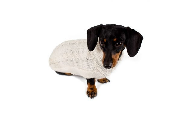 """<em><strong>We combine textile heritage and global trends with alpaca—a raw, sustainable, and luxurious fibre—to make our designs unique.</strong></em> Soft and snuggly, our elegant alpaca blend sweater is knitted in tactile cables. This classic heavy weight true work of art is perfect for the pampered and discerning dog. Find them in grey, the go-to-color of casual elegance and in white. - Model Gloria is a Mini Dachshund size XS This garment has been designed thinking on the well being of your pet. [fusion_button link=""""https://alqowasi.com/wp-content/uploads/2021/03/Sizing-guide-sweater-dresses.png"""" text_transform=""""none"""" title="""""""" target=""""lightbox"""" link_attributes="""""""" alignment_medium="""""""" alignment_small="""""""" alignment="""""""" modal="""""""" hide_on_mobile=""""small-visibility,medium-visibility,large-visibility"""" sticky_display=""""normal,sticky"""" class=""""button-chart"""" id="""""""" color=""""default"""" button_gradient_top_color="""""""" button_gradient_bottom_color="""""""" button_gradient_top_color_hover="""""""" button_gradient_bottom_color_hover="""""""" accent_color="""""""" accent_hover_color="""""""" type="""""""" bevel_color="""""""" border_width="""""""" border_radius="""""""" border_color="""""""" border_hover_color="""""""" size=""""small"""" stretch=""""default"""" margin_top="""""""" margin_right="""""""" margin_bottom="""""""" margin_left="""""""" icon=""""fa-ruler fas"""" icon_position=""""left"""" icon_divider=""""no"""" animation_type="""""""" animation_direction=""""left"""" animation_speed=""""0.3"""" animation_offset=""""""""]Sizing Chart[/fusion_button]"""