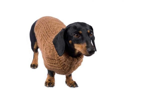 "<em><strong>We combine textile heritage and global trends with alpaca—a raw, sustainable, and luxurious fiber—to make our designs unique.</strong></em> Soft as a cloud in fluffy alpaca. This luxurious cable knit is the ultimate timeless staple for any dog's wardrobe. Features ribbed turtleneck, leash opening - Model Gloria is a Mini Dachshund size XS This garment has been designed thinking on the well being of your pet. [fusion_button link=""https://alqowasi.com/wp-content/uploads/2021/03/Sizing-guide-sweater-dresses.png"" text_transform=""none"" title="""" target=""lightbox"" link_attributes="""" alignment_medium="""" alignment_small="""" alignment="""" modal="""" hide_on_mobile=""small-visibility,medium-visibility,large-visibility"" sticky_display=""normal,sticky"" class=""button-chart"" id="""" color=""default"" button_gradient_top_color="""" button_gradient_bottom_color="""" button_gradient_top_color_hover="""" button_gradient_bottom_color_hover="""" accent_color="""" accent_hover_color="""" type="""" bevel_color="""" border_width="""" border_radius="""" border_color="""" border_hover_color="""" size=""small"" stretch=""default"" margin_top="""" margin_right="""" margin_bottom="""" margin_left="""" icon=""fa-ruler fas"" icon_position=""left"" icon_divider=""no"" animation_type="""" animation_direction=""left"" animation_speed=""0.3"" animation_offset=""""]Sizing Chart[/fusion_button]"