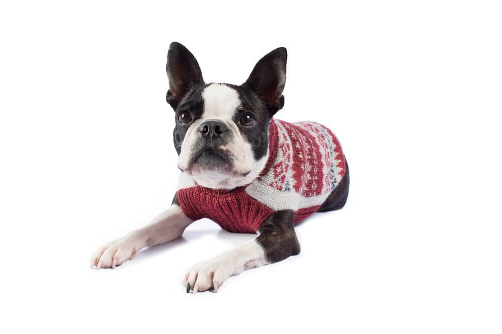 Fall Medley Burgundy Alpaca Dog Sweater