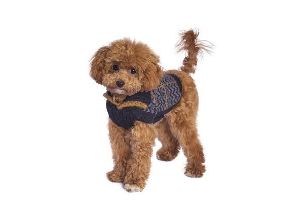 """<span style=""""font-weight: 400;"""">Preppy style is all about a classic, clean, and collegiate appearance. If you're the kind of pup that prefers to look classy rather than rugged, the Preppy Blue alpaca dog sweater could be right for you!</span> <span style=""""font-weight: 400;"""">The V-neck Alpaca sweater is distinguished by dashed line motifs in camel, creating a dynamic and eye-catching aesthetic for your pet´s casual looks.</span> <ul> <li aria-level=""""1"""">Handcrafted from alpaca fiber blends</li> <li style=""""font-weight: 400;"""" aria-level=""""1""""><span style=""""font-weight: 400;"""">Soft</span><span style=""""font-weight: 400;""""> and warm to the touch</span></li> <li style=""""font-weight: 400;"""" aria-level=""""1""""><span style=""""font-weight: 400;"""">Not itchy & hypoallergenic</span></li> <li><span style=""""font-weight: 400;"""">Leash opening</span></li> </ul> - Model Kira is a Miniature Poodle Puppy Size XXS - Model Jagger is a Miniature Bull Terrier Size L This garment has been designed thinking on the well-being of your pet. [fusion_button link=""""https://alqowasi.com/wp-content/uploads/2021/03/Sizing-guide-sweater-dresses.png"""" text_transform=""""none"""" title="""""""" target=""""lightbox"""" link_attributes="""""""" alignment_medium="""""""" alignment_small="""""""" alignment="""""""" modal="""""""" hide_on_mobile=""""small-visibility,medium-visibility,large-visibility"""" sticky_display=""""normal,sticky"""" class=""""button-chart"""" id="""""""" color=""""default"""" button_gradient_top_color="""""""" button_gradient_bottom_color="""""""" button_gradient_top_color_hover="""""""" button_gradient_bottom_color_hover="""""""" accent_color="""""""" accent_hover_color="""""""" type="""""""" bevel_color="""""""" border_width="""""""" border_radius="""""""" border_color="""""""" border_hover_color="""""""" size=""""small"""" stretch=""""default"""" margin_top="""""""" margin_right="""""""" margin_bottom="""""""" margin_left="""""""" icon=""""fa-ruler fas"""" icon_position=""""left"""" icon_divider=""""no"""" animation_type="""""""" animation_direction=""""left"""" animation_speed=""""0.3"""" animation_offset=""""""""]Sizing Chart[/fusion_button]"""