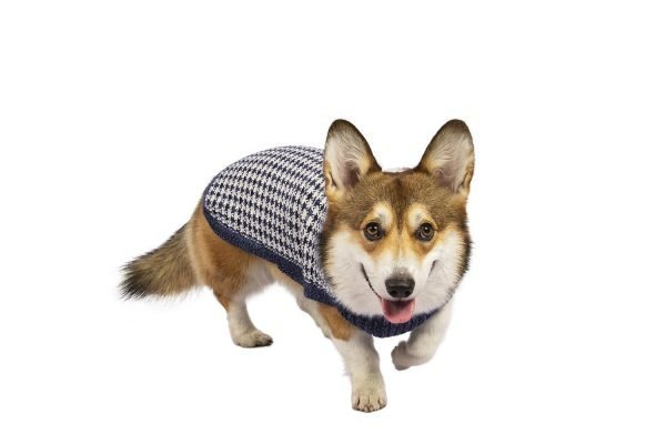 """Unbelievably light and lofty, this luxe and versatile sweater floats over the body with effortless grace. Made of the softest alpaca blend yarn, this whimsical jumper will keep your dog warm and classy at the same time. <ul> <li aria-level=""""1"""">Handcrafted from alpaca fiber blends</li> <li style=""""font-weight: 400;"""" aria-level=""""1""""><span style=""""font-weight: 400;"""">Soft</span><span style=""""font-weight: 400;""""> and warm to the touch</span></li> <li style=""""font-weight: 400;"""" aria-level=""""1""""><span style=""""font-weight: 400;"""">Not itchy & hypoallergenic</span></li> <li><span style=""""font-weight: 400;"""">Leash opening</span></li> </ul> - Model Ramona is a French Bulldog 6 months size S - Model Cindy is a Border Collie size XL - Model Betty is a Boston Terrier size S - Model Gloria is a Mini Dachshund size XS This garment has been designed thinking on the well-being of your pet. [fusion_button link=""""https://alqowasi.com/wp-content/uploads/2021/03/Sizing-guide-sweater-dresses.png"""" text_transform=""""none"""" title="""""""" target=""""lightbox"""" link_attributes="""""""" alignment_medium="""""""" alignment_small="""""""" alignment="""""""" modal="""""""" hide_on_mobile=""""small-visibility,medium-visibility,large-visibility"""" sticky_display=""""normal,sticky"""" class=""""button-chart"""" id="""""""" color=""""default"""" button_gradient_top_color="""""""" button_gradient_bottom_color="""""""" button_gradient_top_color_hover="""""""" button_gradient_bottom_color_hover="""""""" accent_color="""""""" accent_hover_color="""""""" type="""""""" bevel_color="""""""" border_width="""""""" border_radius="""""""" border_color="""""""" border_hover_color="""""""" size=""""small"""" stretch=""""default"""" margin_top="""""""" margin_right="""""""" margin_bottom="""""""" margin_left="""""""" icon=""""fa-ruler fas"""" icon_position=""""left"""" icon_divider=""""no"""" animation_type="""""""" animation_direction=""""left"""" animation_speed=""""0.3"""" animation_offset=""""""""]Sizing Chart[/fusion_button]"""