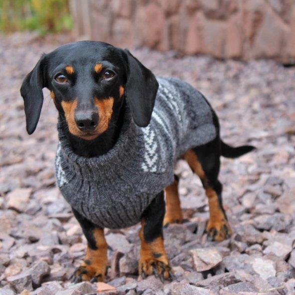 Indigenous Grey alpaca dog sweater