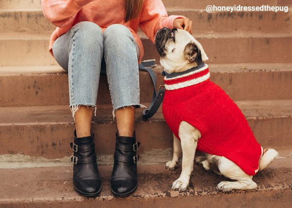 """<span style=""""font-weight: 400;"""">Chunky, natural, handmade cable pullovers are the real treat for your dog! Forever warm in alpaca wool. Find it in three available colors – red, silver grey, navy blue.</span> <ul> <li aria-level=""""1"""">Handcrafted from alpaca fiber blends</li> <li style=""""font-weight: 400;"""" aria-level=""""1""""><span style=""""font-weight: 400;"""">Soft</span><span style=""""font-weight: 400;""""> and warm to the touch</span></li> <li style=""""font-weight: 400;"""" aria-level=""""1""""><span style=""""font-weight: 400;"""">Not itchy & hypoallergenic</span></li> <li><span style=""""font-weight: 400;"""">Leash opening</span></li> </ul> - Model Sam is a Dachshund wear size M This garment has been designed thinking on the well being of your pet. [fusion_button link=""""https://alqowasi.com/wp-content/uploads/2021/03/Sizing-guide-sweater-dresses.png"""" text_transform=""""none"""" title="""""""" target=""""lightbox"""" link_attributes="""""""" alignment_medium="""""""" alignment_small="""""""" alignment="""""""" modal="""""""" hide_on_mobile=""""small-visibility,medium-visibility,large-visibility"""" sticky_display=""""normal,sticky"""" class=""""button-chart"""" id="""""""" color=""""default"""" button_gradient_top_color="""""""" button_gradient_bottom_color="""""""" button_gradient_top_color_hover="""""""" button_gradient_bottom_color_hover="""""""" accent_color="""""""" accent_hover_color="""""""" type="""""""" bevel_color="""""""" border_width="""""""" border_radius="""""""" border_color="""""""" border_hover_color="""""""" size=""""small"""" stretch=""""default"""" margin_top="""""""" margin_right="""""""" margin_bottom="""""""" margin_left="""""""" icon=""""fa-ruler fas"""" icon_position=""""left"""" icon_divider=""""no"""" animation_type="""""""" animation_direction=""""left"""" animation_speed=""""0.3"""" animation_offset=""""""""]Sizing Chart[/fusion_button]"""
