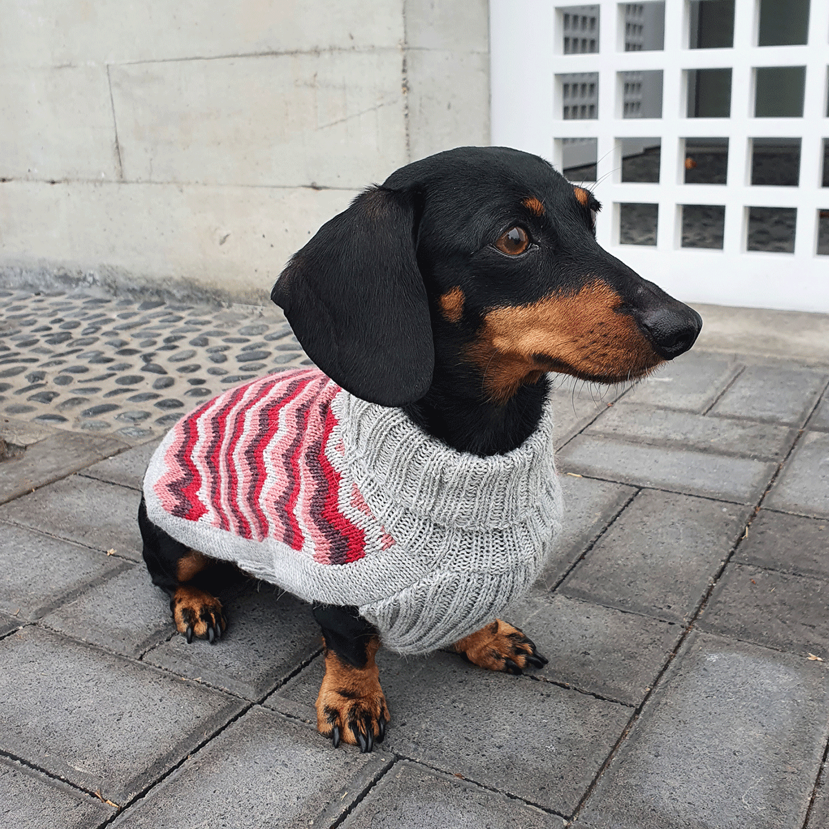 Chevron Pink-Collection 2020: Alqo Wasi alpaca sweater for dogs