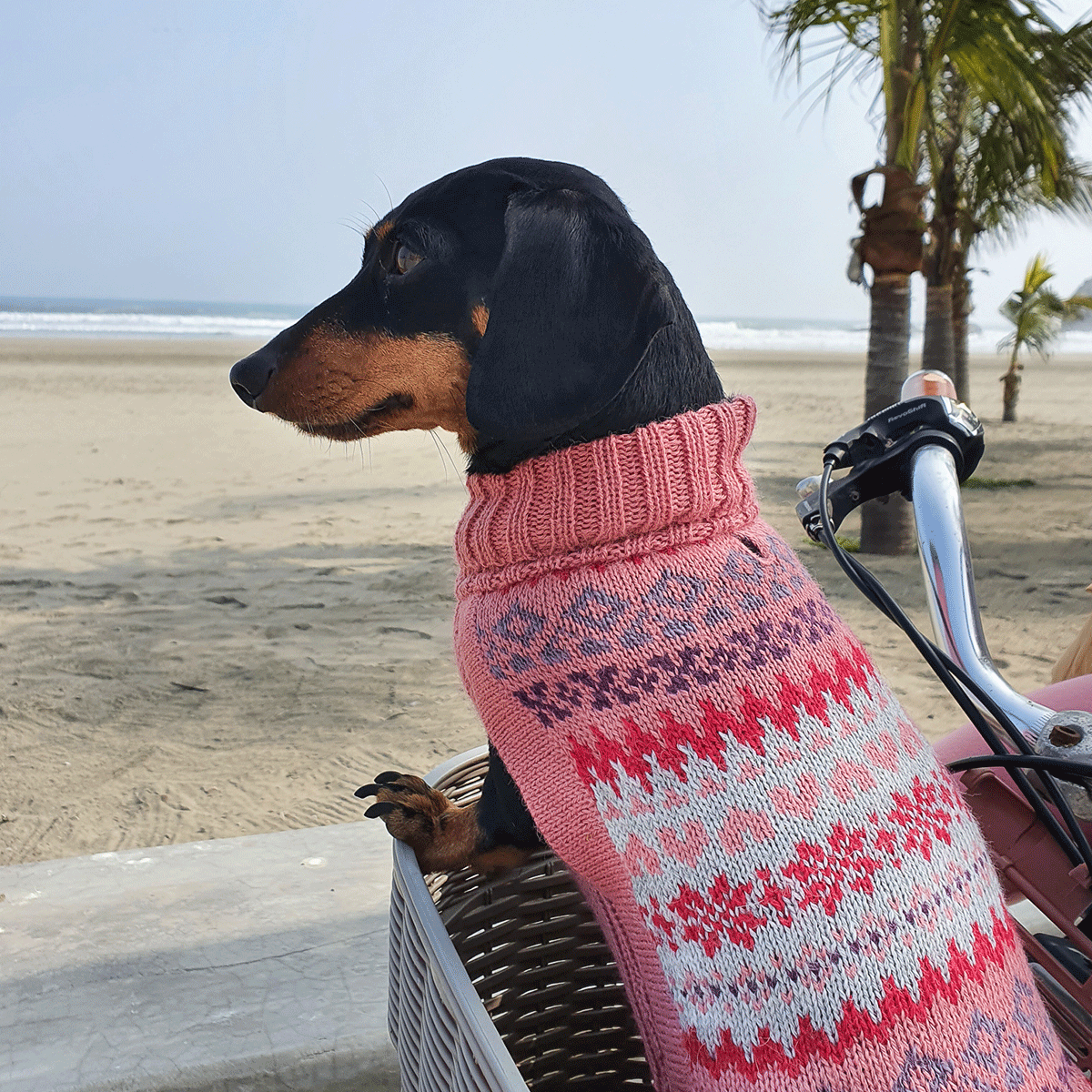 Fall Medley Pink-Collection 2020: Alqo Wasi alpaca sweater for dogs