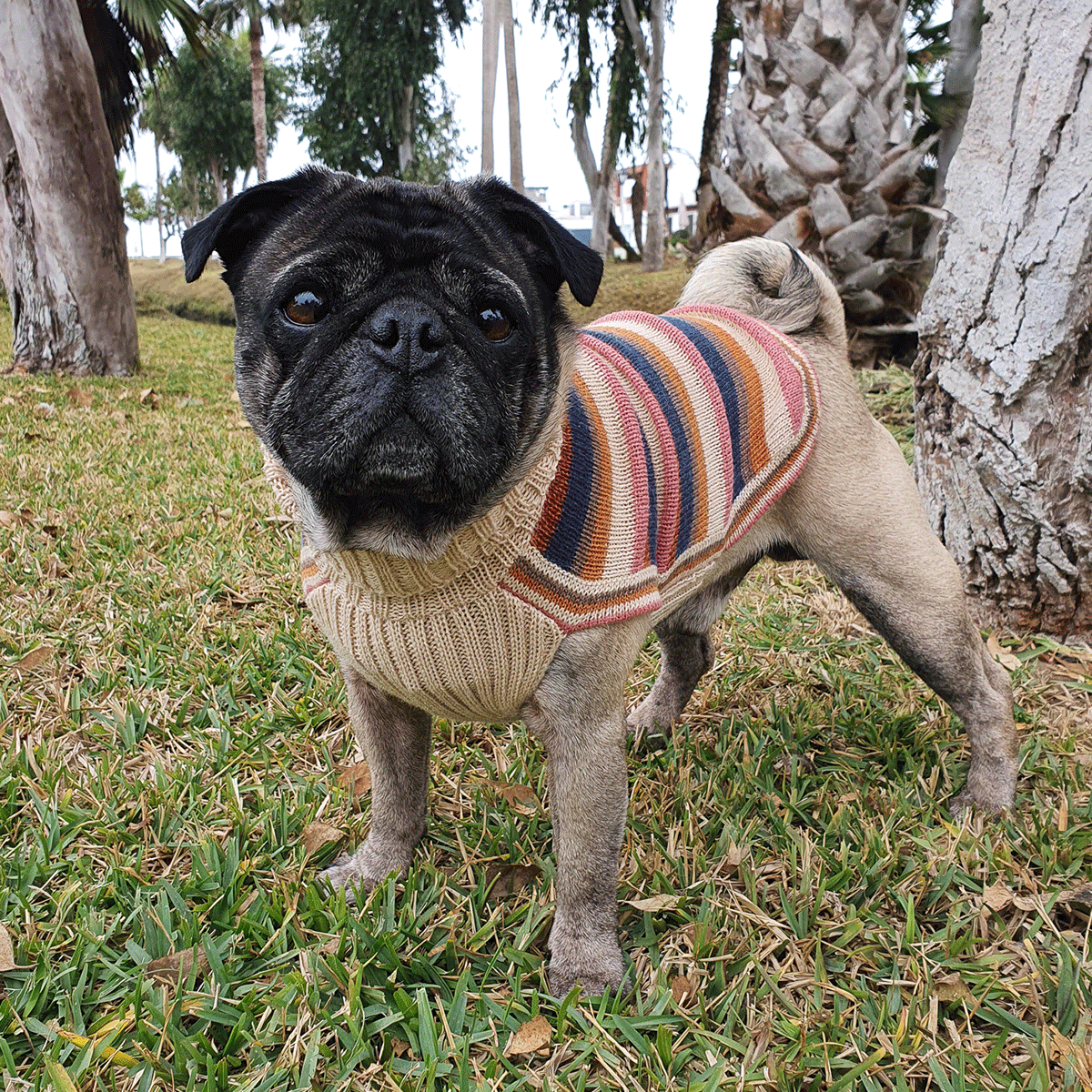 Honey Stripes-Collection 2020: Alqo Wasi alpaca sweater for dogs