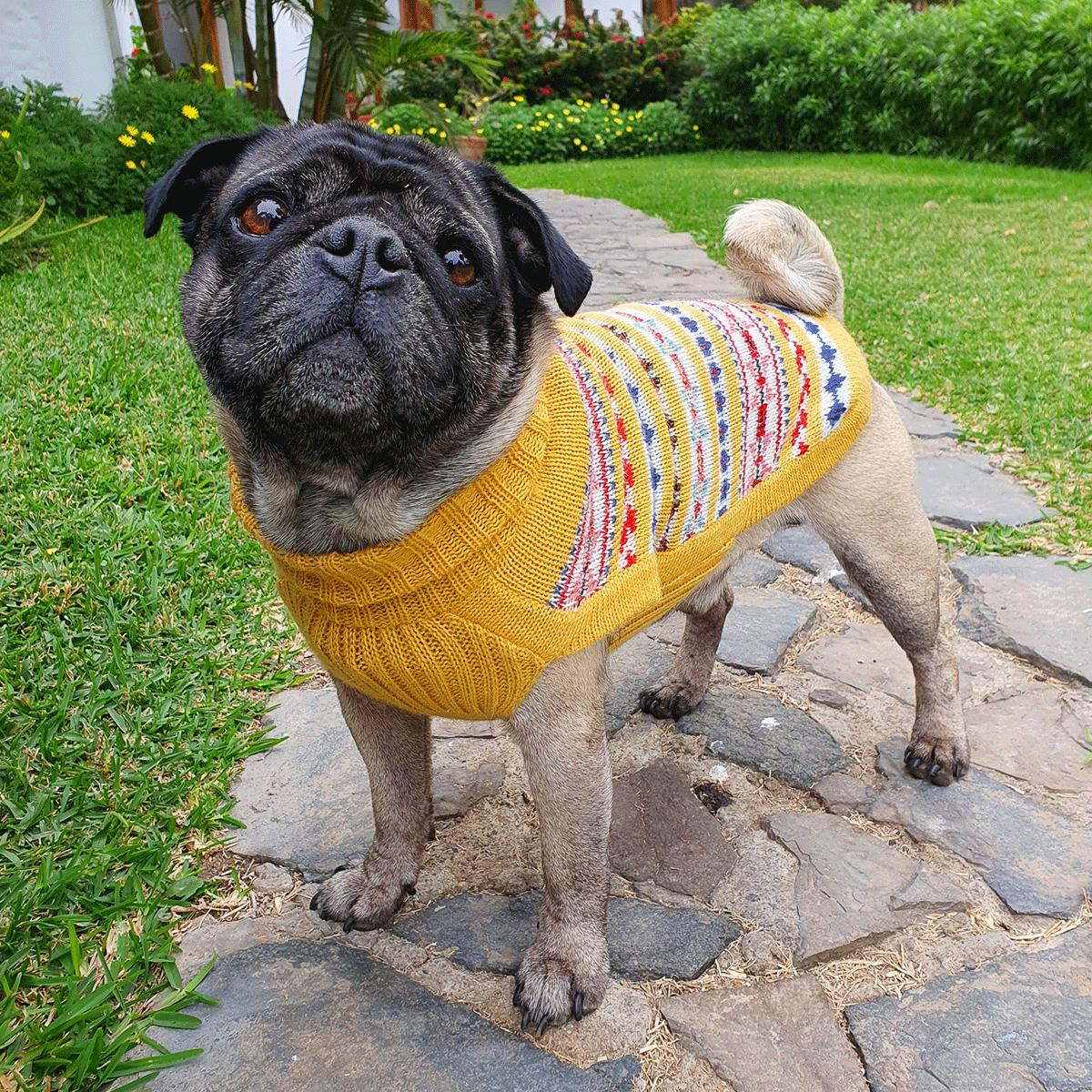 Little Miss Sunshine-Collection 2020: Alqo Wasi alpaca sweater for dogs