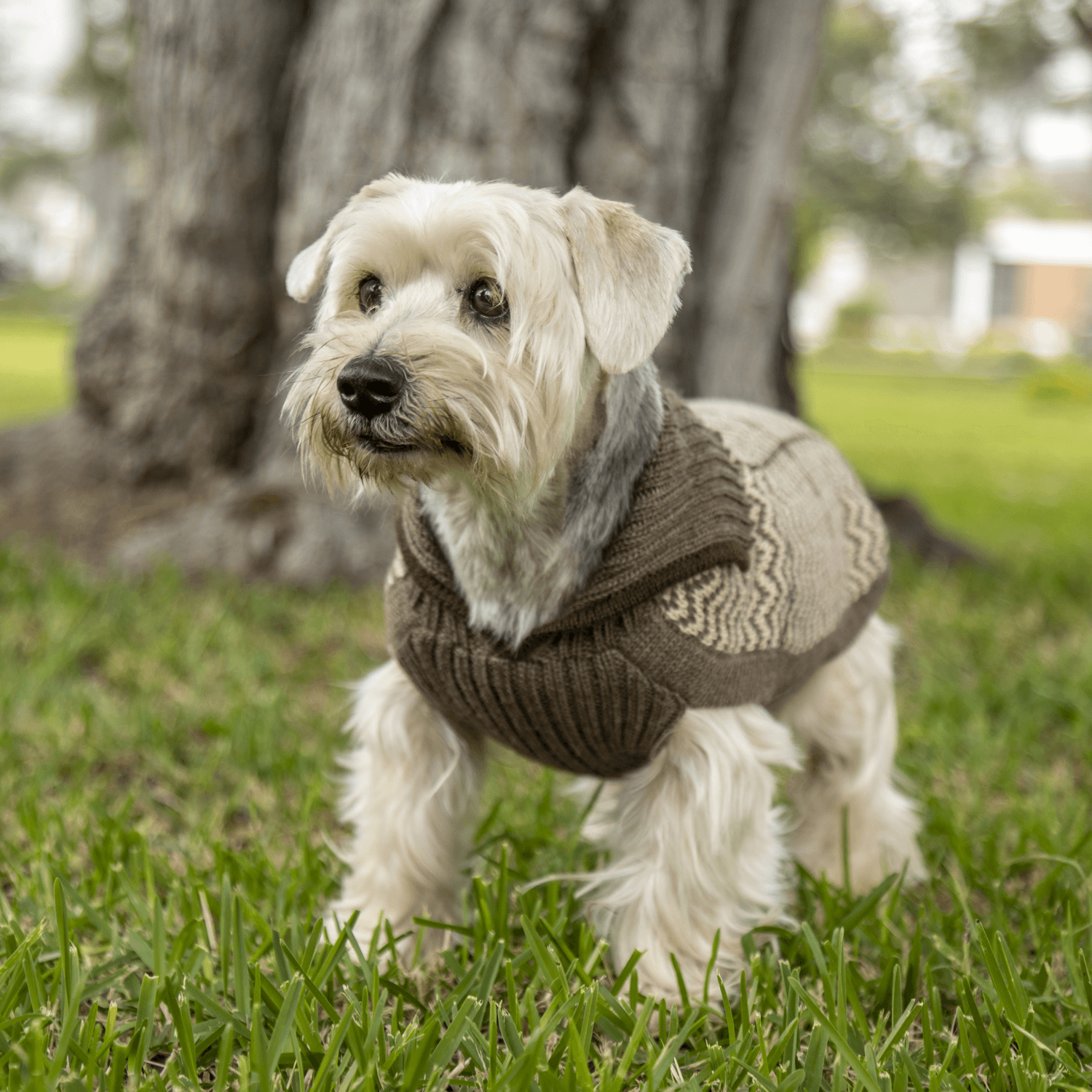 Preppy Natural-Collection 2020: Alqo Wasi alpaca sweater for dogs