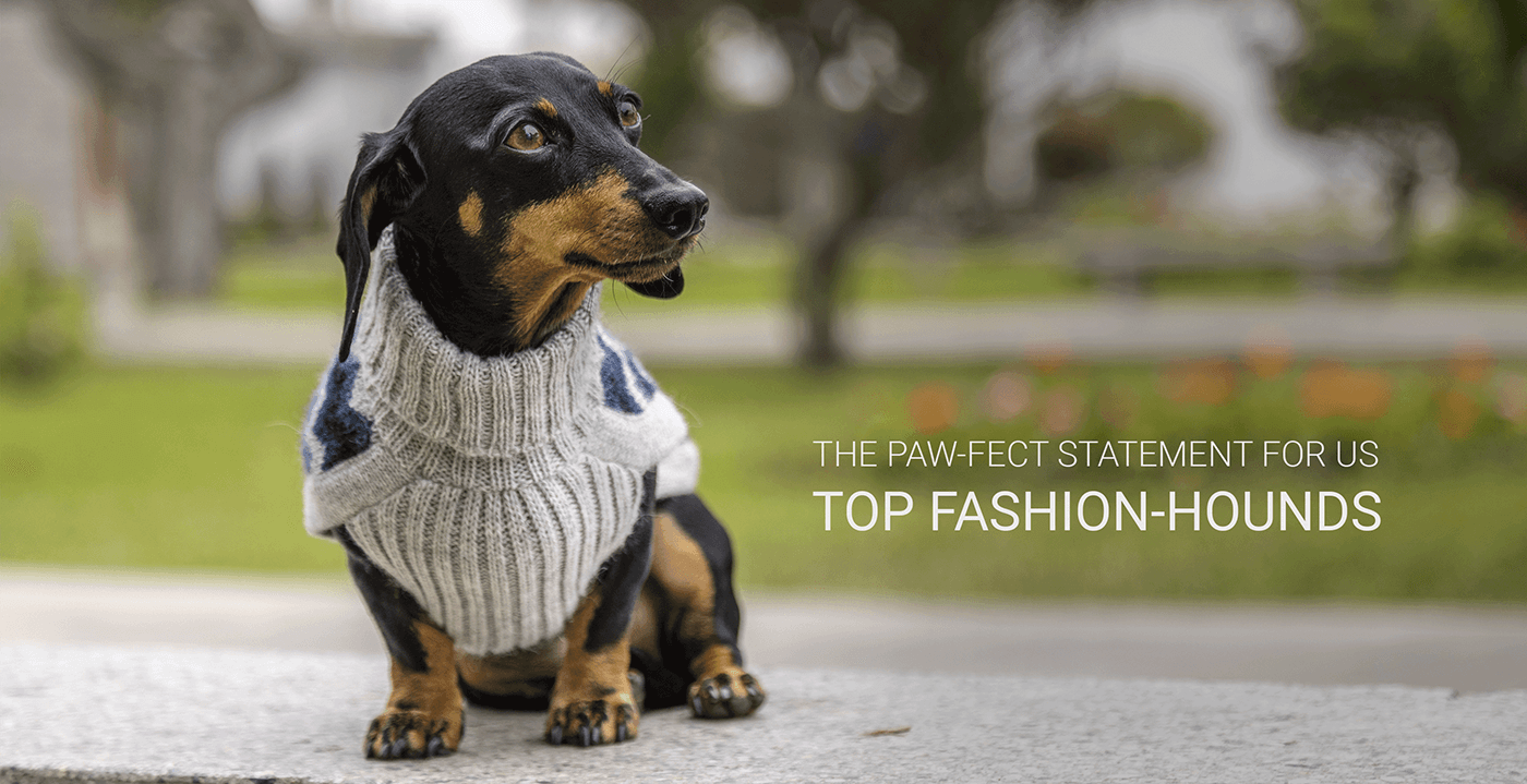 Banner home Alqo Wasi: The paw-fect statement for us top fashion-hounds desktop