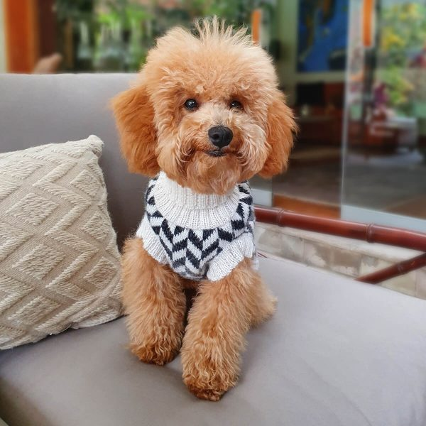 Herringbone-Collection 2020: Alqo Wasi alpaca sweater for dogs