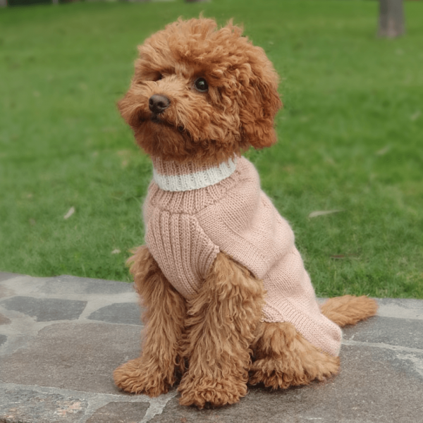 """Chunky, natural, handmade cable pullovers are the real treat for your dog! Forever warm in <span style=""""font-weight: 400;"""">Dusty Pink alpaca dog sweater.</span> <ul> <li aria-level=""""1"""">Handcrafted from alpaca fiber blends</li> <li aria-level=""""1"""">Softand warm to the touch</li> <li aria-level=""""1"""">Not itchy & hypoallergenic</li> <li>Leash opening</li> </ul> - Churro is a 6 month miniature Poodle size XS. <strong>Because your dog and YOU loved it SO much! Pre-order our loved Dusty Pink Alpaca Dog Sweater this season. </strong><strong>Please note that orders placed during this week including PRE-ORDERED garments will be shipped from September 30th to October 11th, 2021. Once your order is ready to ship, delivery time ranges from 3-5 business days worldwide with DHL.</strong>  This garment has been designed thinking on the well-being of your pet. [fusion_button link=""""https://alqowasi.com/wp-content/uploads/2021/03/Sizing-guide-sweater-dresses.png"""" text_transform=""""none"""" title="""""""" target=""""lightbox"""" link_attributes="""""""" alignment_medium="""""""" alignment_small="""""""" alignment="""""""" modal="""""""" hide_on_mobile=""""small-visibility,medium-visibility,large-visibility"""" sticky_display=""""normal,sticky"""" class=""""button-chart"""" id="""""""" color=""""default"""" button_gradient_top_color="""""""" button_gradient_bottom_color="""""""" button_gradient_top_color_hover="""""""" button_gradient_bottom_color_hover="""""""" accent_color="""""""" accent_hover_color="""""""" type="""""""" bevel_color="""""""" border_width="""""""" border_radius="""""""" border_color="""""""" border_hover_color="""""""" size=""""small"""" stretch=""""default"""" margin_top="""""""" margin_right="""""""" margin_bottom="""""""" margin_left="""""""" icon=""""fa-ruler fas"""" icon_position=""""left"""" icon_divider=""""no"""" animation_type="""""""" animation_direction=""""left"""" animation_speed=""""0.3"""" animation_offset=""""""""]Sizing Chart[/fusion_button]"""