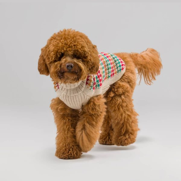 """<span style=""""font-weight: 400;"""">A rainbow of festive tones makes the Holiday Artesana alpaca dog sweater so unique and classic. Keep your pup cozy during the joyful season with this warm pullover.</span> <ul> <li aria-level=""""1"""">Handcrafted from alpaca fiber blends</li> <li style=""""font-weight: 400;"""" aria-level=""""1""""><span style=""""font-weight: 400;"""">Soft</span><span style=""""font-weight: 400;""""> and warm to the touch</span></li> <li style=""""font-weight: 400;"""" aria-level=""""1""""><span style=""""font-weight: 400;"""">Not itchy & hypoallergenic</span></li> <li><span style=""""font-weight: 400;"""">Leash opening</span></li> </ul> – Churro is a Poodle size S This garment has been designed thinking on the well-being of your pet. [fusion_button link=""""https://alqowasi.com/wp-content/uploads/2021/03/Sizing-guide-sweater-dresses.png"""" text_transform=""""none"""" title="""""""" target=""""lightbox"""" link_attributes="""""""" alignment_medium="""""""" alignment_small="""""""" alignment="""""""" modal="""""""" hide_on_mobile=""""small-visibility,medium-visibility,large-visibility"""" sticky_display=""""normal,sticky"""" class=""""button-chart"""" id="""""""" color=""""default"""" button_gradient_top_color="""""""" button_gradient_bottom_color="""""""" button_gradient_top_color_hover="""""""" button_gradient_bottom_color_hover="""""""" accent_color="""""""" accent_hover_color="""""""" type="""""""" bevel_color="""""""" border_width="""""""" border_radius="""""""" border_color="""""""" border_hover_color="""""""" size=""""small"""" stretch=""""default"""" margin_top="""""""" margin_right="""""""" margin_bottom="""""""" margin_left="""""""" icon=""""fa-ruler fas"""" icon_position=""""left"""" icon_divider=""""no"""" animation_type="""""""" animation_direction=""""left"""" animation_speed=""""0.3"""" animation_offset=""""""""]Sizing Chart[/fusion_button]  <strong>Please note that orders that placed during this week including PRE-ORDERED garments will be shipped from October 27th to November 4th, 2021. As always, we can assure you that our unique collection is worth the wait. Once your order is ready to ship, delivery time ranges from 3-5 business days worldwide with DHL.</strong>"""